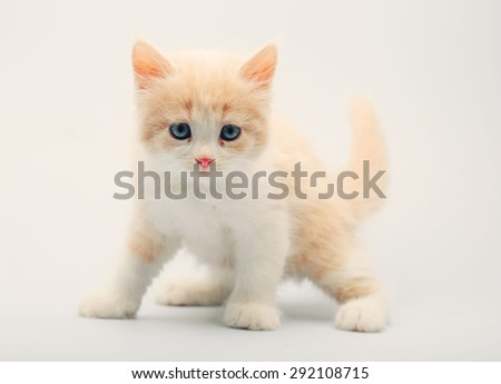 Cute little kitten on white #292108715