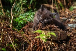 Cute little Kitten playing outdoors in the grass during a sunny day. Taken in Ketchikan, Alaska, United States.