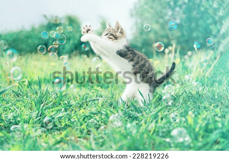 Cute little kitten playing with soap bubbles on summer grass outdoor. Image with vintage instagram filter
