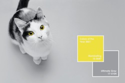 Cute little kitten sits on Illuminating Yellow and Ultimate Gray background. Banner about pets. Creative design demonstrating colors of the year 2021