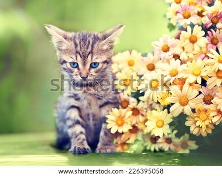 Cute little kitten sitting near flowers outdoor