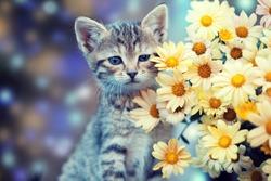 Cute little kitten sitting near yellow daisy flowers