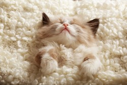 Cute little kitten sleeping on white plaid, closeup
