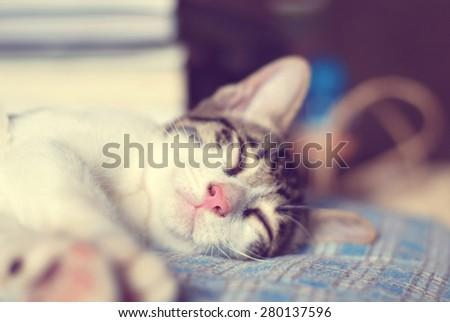 Cute little kitten sleeps on blue tartan blanket