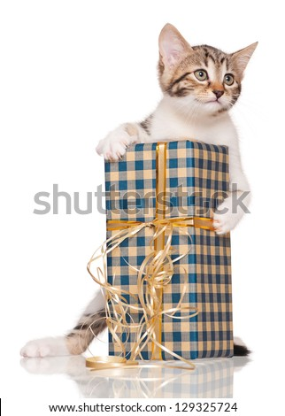 Cute little kitten with gift package isolated on white background
