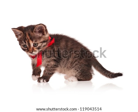 Cute little kitten with red bow isolated on white background - stock photo