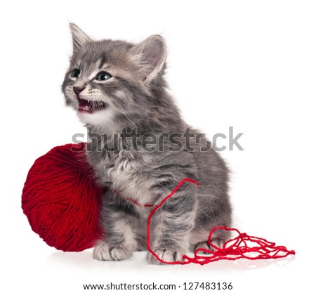 Cute little kitten with red yarn hank isolated on white background