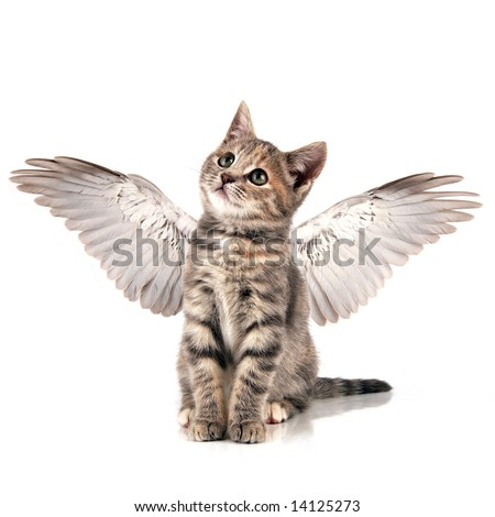 Cute little kitten with wings