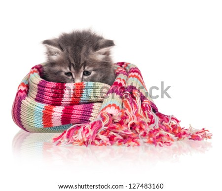 Cute little kitten wrapped up in a warm knitted scarf on white background