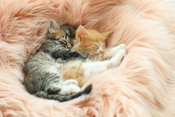 Cute little kittens sleeping on pink furry blanket