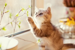 cute little kitty playing with green leaves