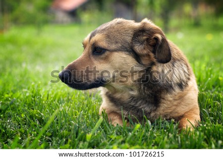 Cute little mixed breed dog in garden - stock photo