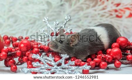 Cute little mouse #1246552981