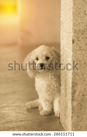 Cute little puppy dog waiting for owner. Vintage filter.