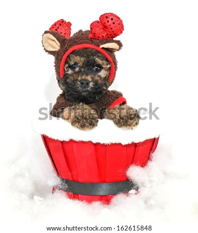 Cute little puppy dressed up in a reindeer outfit. on a white background. - stock photo