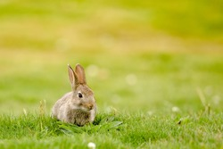 Cute little rabbit in the grass
