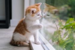 Cute little red cat sit on wooden floor near window. Young little red kitty looking at its reflection in window