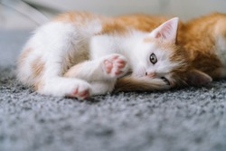 Cute little red cat sitting on yellow chair near window on background. Young cute little red kitty. Long haired ginger kitten play at home. Cute funny home pets. Domestic animal and Young kittens.
