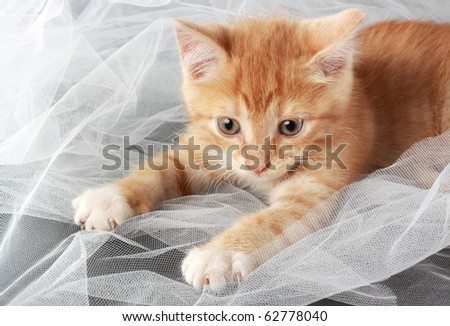 cute little red kitten playing with fabric