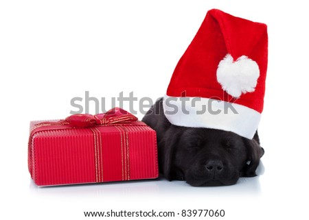 cute little santa - black labrador puppy sleeping near a red present, on white background