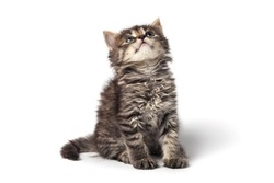 Cute little striped kitten isolated on white background. High quality photo