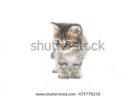 cute little tabby kitten on white background, baby cat #459778258