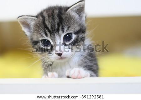 Cute little tabby kitten sitting in box. Small adorable cat. Baby cat. Sweet kitty cat. Fur striped cat pet. Kitten portrait. Cat photo. Pretty kitten. Nice cat. Lovely kitten. Charming kitten cat