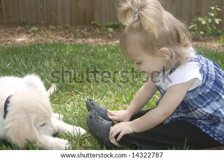 golden retriever puppy cut. hairstyles golden retriever