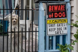 Cute little white dog looking through fence next to sign,