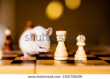 Cute little white rat with big ears siting on the chess board on the warm yellow background. #1305708208