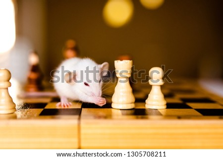 Cute little white rat with big ears siting on the chess board on the warm yellow background. #1305708211