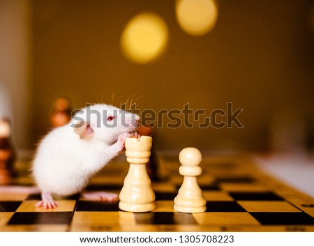 Cute little white rat with big ears siting on the chess board on the warm yellow background. #1305708223