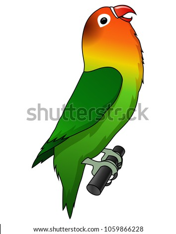 cute lovebird cartoon isolated on white background.