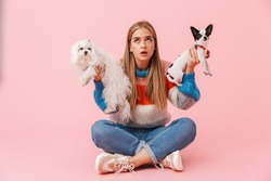 Cute lovely confused girl wearing sweater sitting with legs crossed with her pet chihuahua and lapdog isolated over pink background, choosing dogs