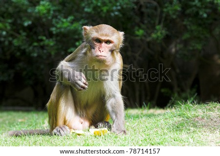 cute macaque sitting on green forest background