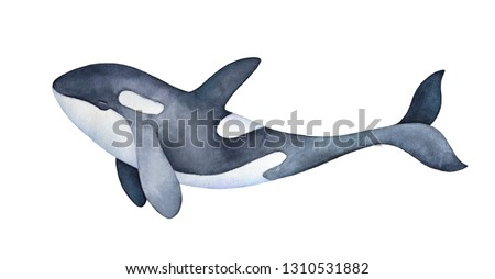 Cute marine orca kid character portrait. Smiling spotted snout and long playful tail. Hand painted watercolor and ink graphic drawing on white background, cutout element for prints, design, decor.