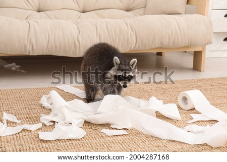 Cute mischievous raccoon playing with toilet paper on floor indoors Photo stock ©