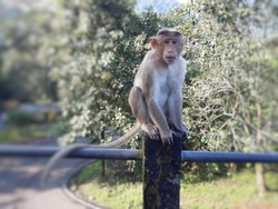 Cute monkey . Animal. Monkey sitting on block.