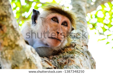 Cute monkey face portrait view. Funny monkey portrait. Monkey eyes view. Monkey portrait