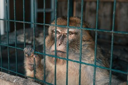Cute monkey sitting in cage on farm