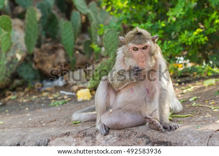 Cute monkeys A cute monkey lives in a natural forest of Thailand.  Zdjęcia stock ©