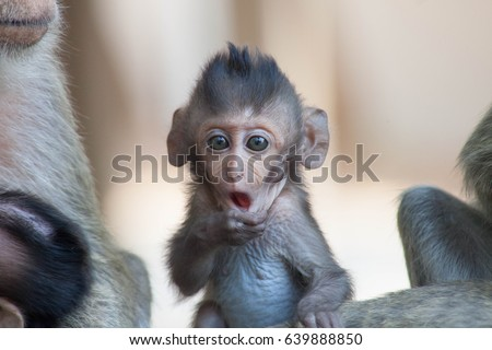 Cute monkeys A cute monkey lives in a natural forest of Thailand. - Shutterstock ID 639888850