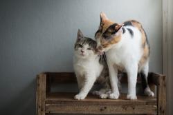 Cute mother cat licking her kitten on wooden shelf