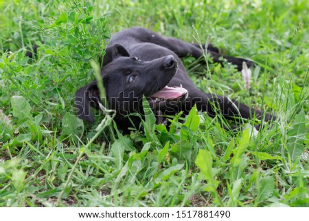Cute multibred puppy from the dog shelter is lying in the green grass. #1517881490