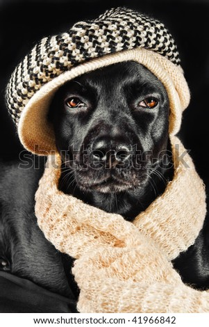 Cute mutt wearing a vintage hat and a shawl