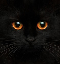 Cute muzzle of a black cat with red eyes closeup