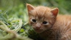 Cute New Born Kitty Sleep