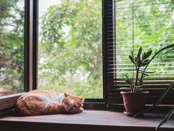 Cute orange and white cat sleeping on window sill