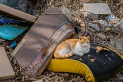 Cute orange and white tabby cat resting comfortably on trashed cushion.