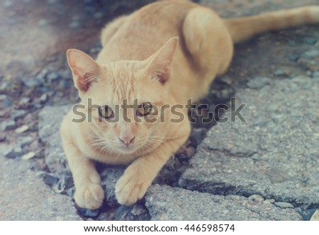cute orange cat looking and...